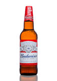 LONDON,UK - MARCH 21, 2017 : Bottle of Budweiser Beer with new twist off cap on white. An American lager first introduced in 1876. Stock Photography