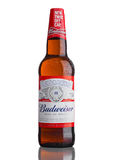 LONDON,UK - MARCH 21, 2017 : Bottle of Budweiser Beer with new twist off cap on white. An American lager first introduced in 1876. Stock Image