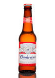 LONDON,UK - MARCH 21, 2017 : Bottle of Budweiser Beer on whote background, an American lager first introduced in 1876. LONDON,UK - MARCH 21, 2017 : Bottle of Royalty Free Stock Photo