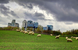 LONDON, UK -MARCH 29, 2014 Canary Wharf view from the local farm Royalty Free Stock Images