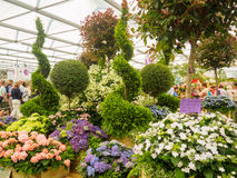 Free LONDON, UK - MAY 25, 2017: RHS Chelsea Flower Show 2017 Stock Photo - 95008370