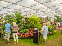 LONDON, UK - MAY 25, 2017: RHS Chelsea Flower Show 2017. Visitors looking at mixed plants display Royalty Free Stock Images