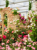 LONDON, UK - MAY 25, 2017: RHS Chelsea Flower Show 2017. Visitors observing variegated roses displays Stock Photos