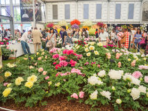 LONDON, UK - MAY 25, 2017: RHS Chelsea Flower Show 2017. Visitors at peonies display royalty free stock photos
