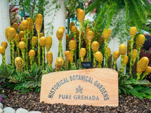 LONDON, UK - MAY 25, 2017: RHS Chelsea Flower Show 2017. Zingiber spectabile display Stock Image