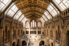LONDON, UK, Natural History museum - building and details Stock Photo