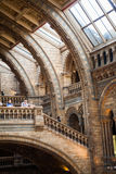 LONDON, UK, Natural History museum - building and details Stock Photography