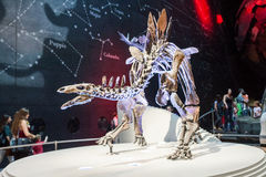 LONDON, UK, Natural History museum - The most complete stegosaurus Royalty Free Stock Photo