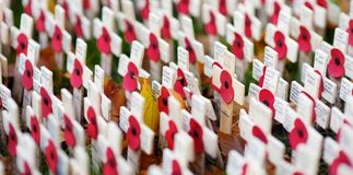 LONDON, UK - NOVEMBER 19, 2017: Poppy crosses at the Westminster Abbey Field of Remembrance, to remember military and civilians wh royalty free stock photos