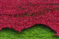 London, UK - October 18, 2014: Art installation 'Blood Swept Lan Stock Photo