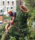 Worker cuts tree branches Stock Image