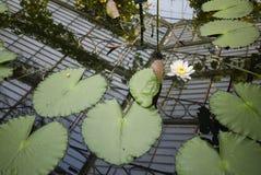 Kew Garden glasshouse royalty free stock photo