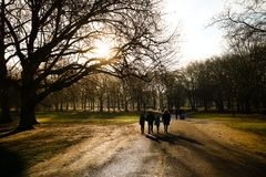 London, United Kingdom - 12/19/2017: A family walking on the pat. H through Green Park in the evening Royalty Free Stock Image