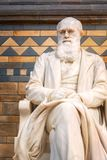 Sir Charles Darwin statue at The Natural History Museum in London, UK. LONDON, UNITED KINGDOM - MAY 14 2018: Sir Charles Darwin English naturalist, geologist and stock photo