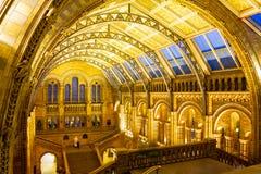 LONDON, VEREINIGTES KÖNIGREICH am 26. Januar 2015 - Naturgeschichtliches Museums-Innenraum in London, Vereinigtes Königreich - 26 stockfoto