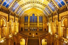 LONDON, VEREINIGTES KÖNIGREICH am 26. Januar 2015 - Naturgeschichtliches Museums-Innenraum in London, Vereinigtes Königreich - 26 stockbild