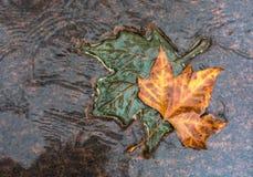 LONDON, VEREINIGTES KÖNIGREICH - 25. NOVEMBER 2018: Zwei Bronze und natürliche Ahornblätter im Kanada-Denkmal in Green Park lizenzfreies stockbild