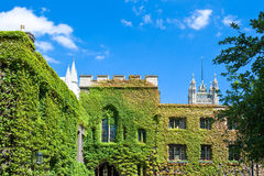 London. The Westminster abbey cloister Royalty Free Stock Photo