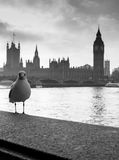 London. Westminster Bridge and Houses of. Parliament. Bird on foreground Stock Photography