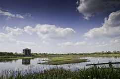 London wetland centre bird hides Stock Images