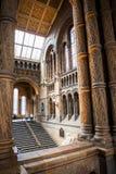 LONDRA, il Regno Unito, museo di storia naturale - costruzione e dettagli Fotografie Stock Libere da Diritti
