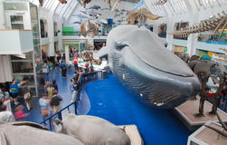 Londra, museo di storia naturale Immagine Stock
