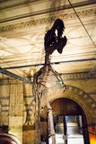 LONDRA, REGNO UNITO - 27 LUGLIO 2015: Museo di storia naturale - dettagli dal Dinosaurus Fotografia Stock