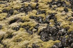 Londrangar Moss and Rocks royalty free stock photo