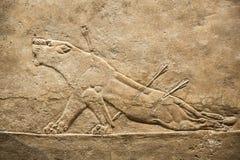 Londres British Museum Alivio del palacio de Assurbanipal en Nínive, Assyria de la caza Fotos de archivo libres de regalías