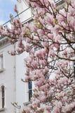 Londres en fleur Photos libres de droits