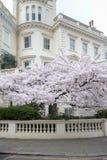 Londres en fleur Images libres de droits