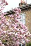 Londres en fleur Photo stock