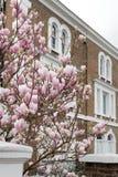 Londres en fleur Photographie stock