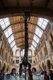 LONDRES, le R-U, musée d'histoire naturelle - bâtiment et détails Image libre de droits
