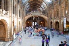 Londres, museo de la historia natural Fotos de archivo
