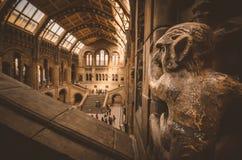 Londres Museu da história natural - a opinião do macaco imagens de stock