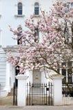 Londres na flor Imagem de Stock Royalty Free