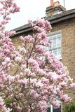 Londres na flor Foto de Stock