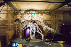 LONDRES, R-U - 27 JUILLET 2015 : Musée d'histoire naturelle - détails du Dinosaurus image libre de droits