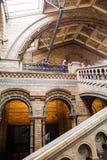 LONDRES, R-U, musée d'histoire naturelle Photo stock