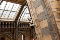 LONDRES, R-U, musée d'histoire naturelle Image stock