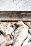 23 07 2015 LONDRES, R-U, musée d'histoire naturelle - détails Image libre de droits