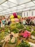 LONDRES, REINO UNIDO - 25 DE MAIO DE 2017: RHS Chelsea Flower Show 2017 Imagem de Stock Royalty Free