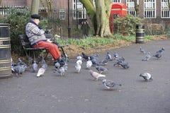 Londres, Reino Unido: 7 de marzo de 2018: Palomas de alimentación de un viejo hombre cerca de Russell Square imagen de archivo