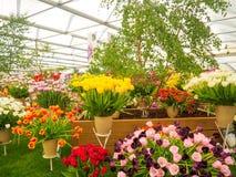 LONDRES, REINO UNIDO - 25 DE MAYO DE 2017: Lado derecho Chelsea Flower Show 2017 fotos de archivo libres de regalías