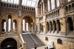 LONDRES, Reino Unido, museo de la historia natural Fotos de archivo