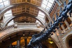 LONDRES, Reino Unido, museo de la historia natural - edificio y detalles Imagenes de archivo