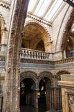 LONDRES, Reino Unido, museo de la historia natural - edificio y detalles Imagen de archivo