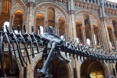 LONDRES, Reino Unido, museu da história natural - construção e detalhes Imagens de Stock