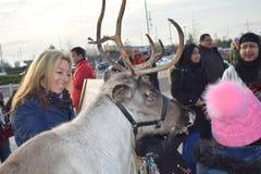 Londres Reino Unido 02/12/2017 Turistas e os cervos Fotos de Stock